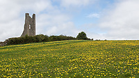 The remains of St. Mary's Abbey stand on a hillside opposite Trim Castle.