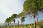 Israel, Upper Galilee, Naftali Mountains forest