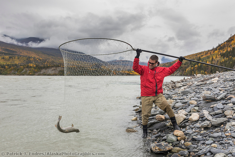 Man dipnets for salmon in the personal use fishery along the Copper River, near Chitina, Alaska.