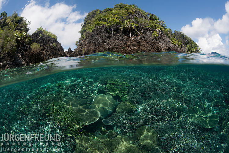 Split level coral reef and island. Misool, Raja Ampat, West Papua, Indonesia,  January 2010