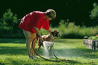A woman washes her dog in her backyard.