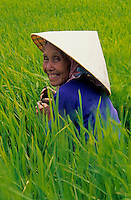 Smiling older Women, a rice farmer in a rice rice field in the Mekong Delta, Vietnam