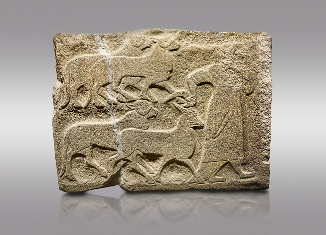 Alaca Hoyuk Sphinx Gate Hittite monumental relief sculpted orthostat stone panel. A figure bringing sacrificial animals.  Anatolian Civilizations Museum, Ankara. Turkey<br /> <br /> The figure wearing a long-tailed cloak holds, with the right hand, the horn of the goat coming from behind.  <br /> <br /> Against a brown gray background.