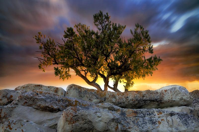 Pine tree growing on top of rock. Grand Canyon National Par, Arizona