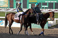 January 17, 2015: All Stormy (KY) with Kerwin D Clark in the Col. E.R. Bradley Handicap at the New Orleans Fairgrounds course. Steve Dalmado/ESW/CSM