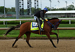 April 26, 2019 : By My Standards works out  at Churchill Downs, Louisville, Kentucky, preparing for a start in the Kentucky Derby. Owner Allied Racing Stable LLC, Trainer W. Bret Calhoun. By Goldencents x A Jealous Woman (Muqtarib)  Mary M. Meek/ESW/CSM
