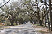 South Boundary Road amid the live oaks, Aiken, SC.