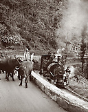 India, West Bengal, farmer and water buffalo next to a passing train, Darjeeling Himalayan Railway (B&W)