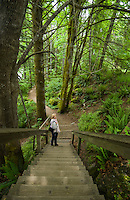 Woman at the bottom of wooden steps in a forest showing moss coverd trees close to the Campbell river Vancouver Island, British Columbia, Canada