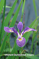 63899-050.15 Blue Flag Iris (Iris virginica) in wetland, Marion Co.  IL