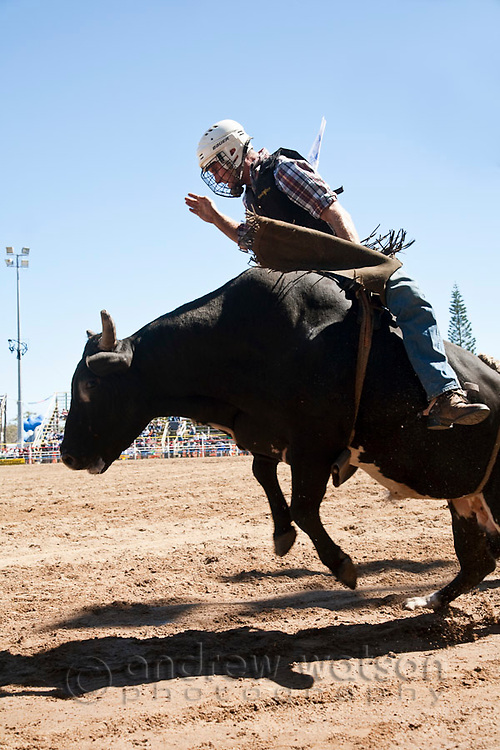 Bull rider in action at Mareeba Rodeo.  Mareeba, Queensland, Australia