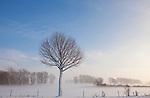 Europa, DEU, Deutschland, Nordrhein Westfalen, NRW, Rheinland, Niederrhein, Wesel-Ginderich, Schnee, Winter, Nebel, Bodennebel, Baeume, Kategorien und Themen, Natur, Umwelt, Landschaft, Jahreszeiten, Stimmungen, Landschaftsfotografie, Landschaften, Landschaftsphoto, Landschaftsphotographie, Natur, Naturfoto, Naturfotos, Naturfotografie, Naturphoto, Naturphotographie, Landschaft, Landschaften, Landschaftsfoto, Landschaftsfotografie, Landschaftsphoto, Landschaftsphotographie....[Fuer die Nutzung gelten die jeweils gueltigen Allgemeinen Liefer-und Geschaeftsbedingungen. Nutzung nur gegen Verwendungsmeldung und Nachweis. Download der AGB unter http://www.image-box.com oder werden auf Anfrage zugesendet. Freigabe ist vorher erforderlich. Jede Nutzung des Fotos ist honorarpflichtig gemaess derzeit gueltiger MFM Liste - Kontakt, Uwe Schmid-Fotografie, Duisburg, Tel. (+49).2065.677997, ..archiv@image-box.com, www.image-box.com]