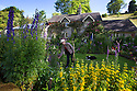 2014_06_24_dale_bottom_cottage