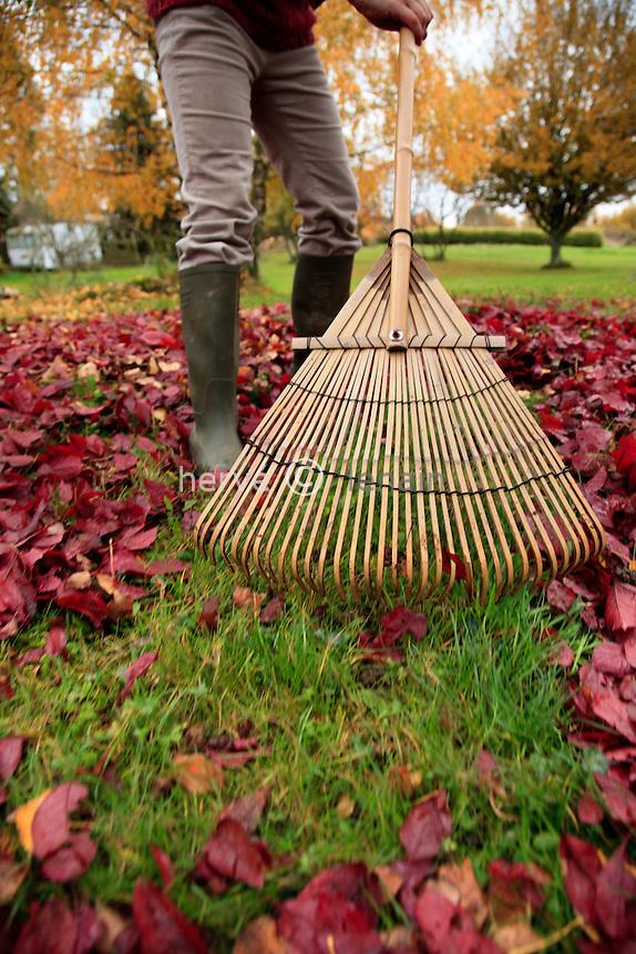 ramassage des feuilles en automne au rateau à feuilles // raking leaves in autumn with a leaf rake