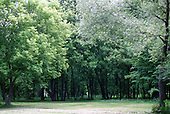 Lush green trees in a park...Trees are woody plants at least  15 feet tall at maturity with a single trunk or stem.