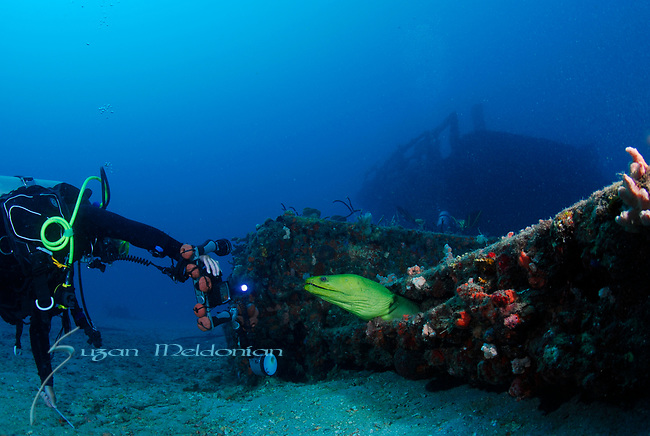 Beate & the Moray, Wreck of the Caribbean, Pompano Dive