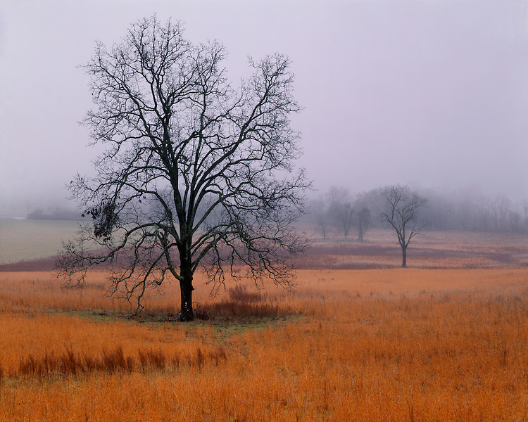 Foggy morning in Cades Cove in late fall; Great Smoky Mountains National Park, TN