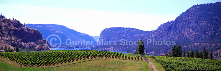 "Vineyards at ""Vaseux Lake"", South Okanagan Valley, BC, British Columbia, Canada"