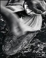 Europe/France/Normandie/Haute-Normandie/76/Seine-Maritime/Dieppe: Chez le poissonnier - Peler la Sole