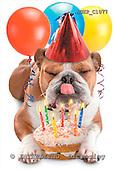 Samantha, ANIMALS,  photos,+dogs,++++,AUKPC1077,#A# Humor, lustig, divertido
