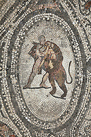 Roman mosaic of Hercules slaying the Nemean Lion, his first labour, from the Labours of Hercules mosaic in the House of the Labours of Hercules, 1st century AD, Volubilis, Northern Morocco. Volubilis was founded in the 3rd century BC by the Phoenicians and was a Roman settlement from the 1st century AD. Volubilis was a thriving Roman olive growing town until 280 AD and was settled until the 11th century. The buildings were largely destroyed by an earthquake in the 18th century and have since been excavated and partly restored. Volubilis was listed as a UNESCO World Heritage Site in 1997. Picture by Manuel Cohen