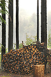 Woodpile at Allagash Camps on moody, rainy day with Boulton Cove background. .
