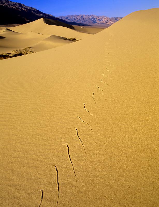 Snake tracks on sand dune. Death Valley National Park, California