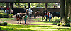 Mr Hall's Opus before The Pollys Jet Stakes at Delaware Park on 10/5/13
