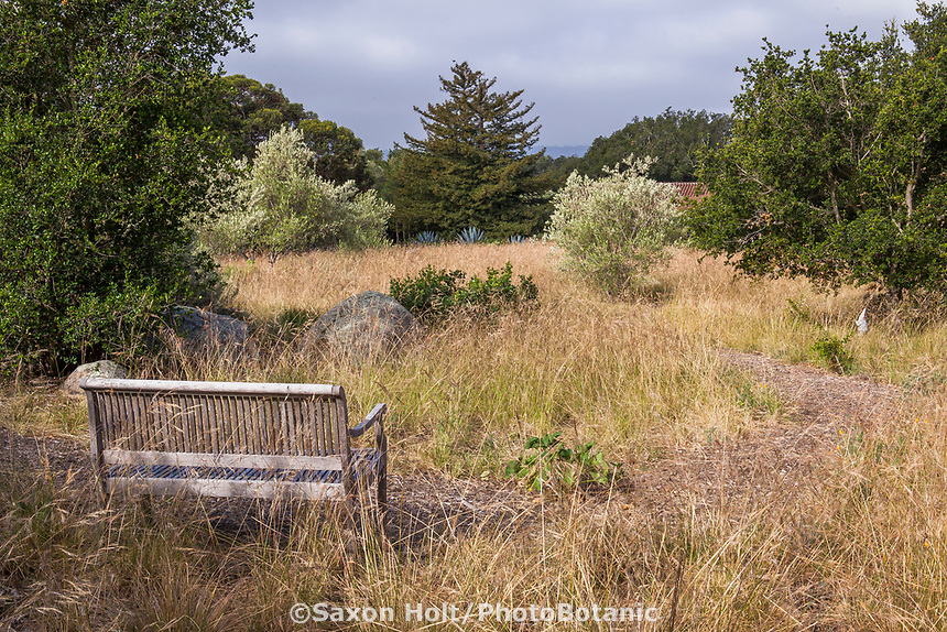 Bench overlooking meadow of California native grass Nassella pulchra, (aka Stipa pulchra), Purple needlegrass - in summer-dry garden, Santa Barbara California