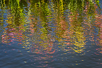"Pink, yellow and green - rippling waters reflect flowers bordering ""The Duck Pond"" at San Lorenzo Park on a summer afternoon."