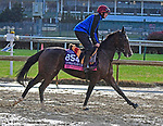 November 1, 2018 : Just Wonderful, trained by Aidan O'Brien, trains for the Breeders' Cup Juvenile Fillies Turf at Churchill Downs on November 1, 2018 in Louisville, KY. Jessica Morgan/ESW/CSM