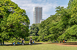 View of High rise from Gyoen National Garden in Shinjuku, Tokyo, Japan