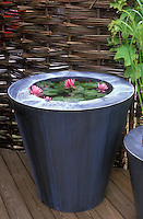 Container Water Garden with Water Lily on deck in galvanized metal modern sophisticated pot, with willow privacy fencing