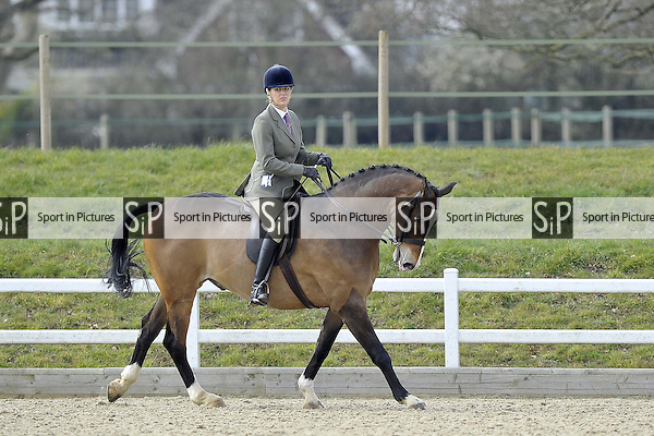 Championship for classes 20 and 21. Affiliated Spring Showing. Brook Farm Training Centre. Essex. 03/04/2016. MANDATORY Credit Garry Bowden/Sportinpictures - NO UNAUTHORISED USE - 07837 394578