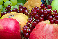 Harvested fruits and berry, apples malus, pears pyrus, Ribes rubrum currants, grapes, in autumn fall in basket