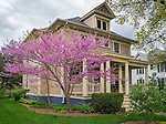 Bureau County, IL: Redbud blooming in front of home built in 1910 in Princeton, Illinois