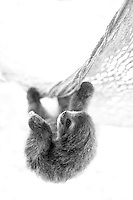 Slothlove in Black and White