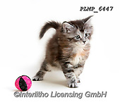 Marek, ANIMALS, REALISTISCHE TIERE, ANIMALES REALISTICOS, cats, photos+++++,PLMP6447,#a#, EVERYDAY