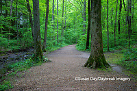 63895-14714 Trail at Ferne Clyffe State Park, Johnson Co. IL