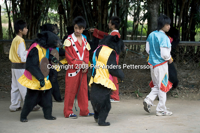 GUILIN, CHINA OCTOBER 13: Handlers wait with Black Bears dressed up in skirts start performing during a bear and tiger show at Xiongsen Bear & Tiger Mountain village Theme Park on October 13, 2008 in Guilin, China. The park has over 1500 tigers and they do research but their main business is producing tiger bone vine and selling tiger parts for traditional medicine, a practice forbidden by the government and condemned by international governments. Visitors can see different shows such as tigers that are fed live animals such as pigs and bulls. Tigers and Bears are used in different shows where bears ride on bicycles, rides horses and tigers. Chinese people love theme parks and new ones are opening constantly. It's estimated that there's about 2400 theme parks in the country. (Photo by Per-Anders Pettersson)..