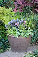 Perennial Pots