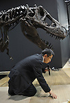 """June 21th, 2011, Tokyo, Japan - Makoto Manabe of the National Science Museum gives an ad hoc lecture of the Tyrannosaurus after its skeletal model was assembled at the museum in Tokyo on Tuesday, June 21, 2011. .The Tyrannosaurusthe greatest carnivorous dinosaur inhabiting the North American Continent about 70 million to 65 million years agowill face the Triceratops in the special exhibition """"Dinosaurs Expo 2011"""" at the museum in July. (Photo by Natsuki Sakai/AFLO)"""