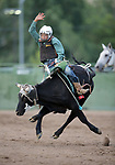 Brendan Webb competes in the steer riders portion of the 5th Annual Carson City Bulls, Broncs &amp; Barrels event at Fuji Park, in Carson City, Nev., on Saturday, July 29, 2017. <br /> Photo by Cathleen Allison/Nevada Photo Source