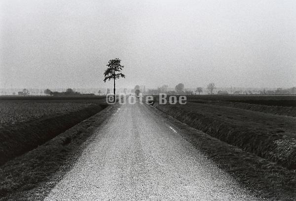Dutch rural farming landscape with little road crossing through it
