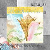 Randy, STILL LIFE STILLLEBEN, NATURALEZA MORTA, paintings+++++CF-Beachcomber,USRW34,#i# maritime,sea shells