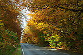 England. Autumn leaves on trees over a road.