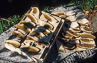 Europe/France/Limousin/19/Corrèze/Chaumeil: Cèpes séchant chez Marcelle Ségurel de l'auberge des Bruyers