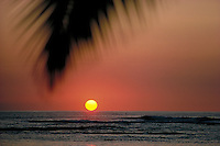 A single palm frond is silhouetted against an orange sunset with the sun at the horizon.