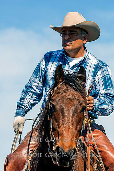 Cowboy roping at a cattle roundup in Cambria on the Central Coast of California<br />