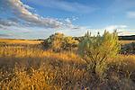 Palouse Falls State Park, Washington: afternoon light rakes the sage grasslands above the Palouse River